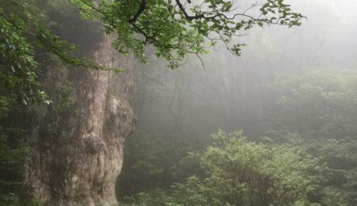屋久島旅行へ行く前に知りたい気候・行き方・交通手段