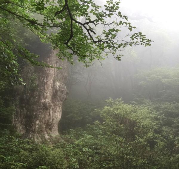 縄文杉を見てきた!屋久島旅行へいく前の準備情報