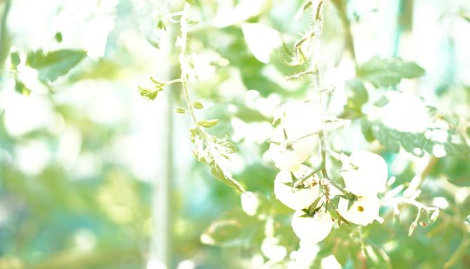 屋外で単焦点レンズSONY SEL35F18を使って撮るならNDフィルターでもっとキレイに撮れる